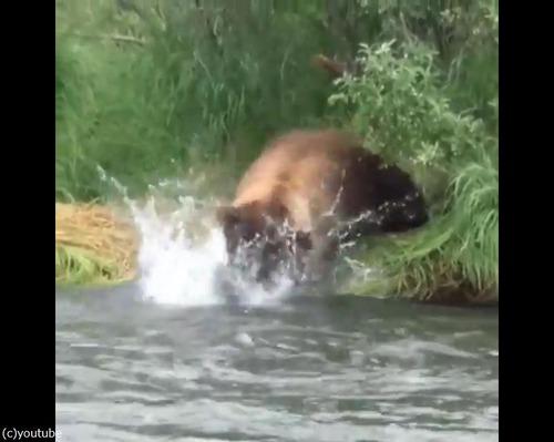 クマの食事02