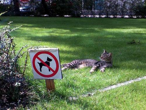 休憩中でリラックス中の動物たち17