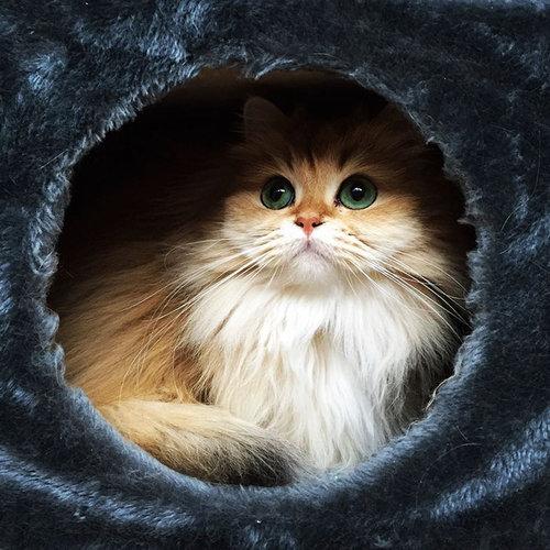 写真写りの良い猫04