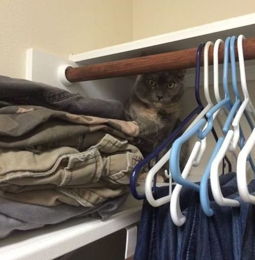 帰宅したら…見知らぬ猫がいる01