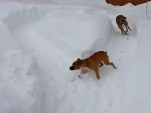 年配の犬が若い犬をだます01