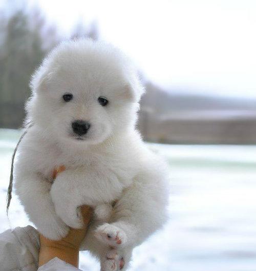 テディベアそっくりな子犬08