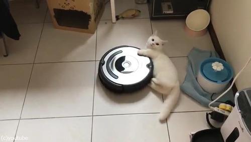 ルンバとともに回転する猫03