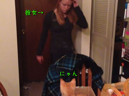 子猫のプレゼント00