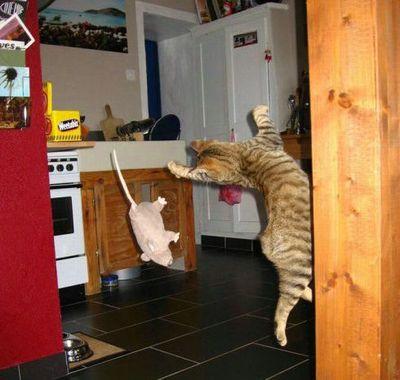 猫ジャンプ14