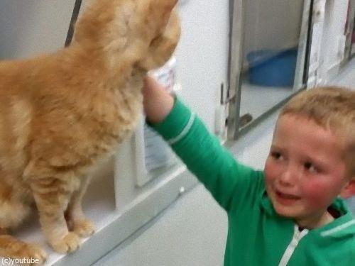 動物保護施設で行方不明の猫と再会した少年00
