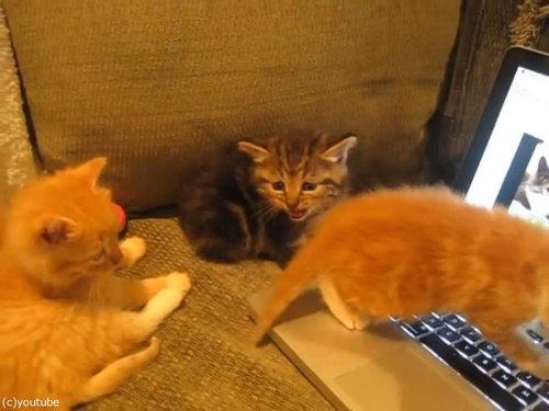 猫動画を見た子猫たち02