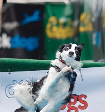 ジャンプの途中で気が変わったけど手遅れだった犬04