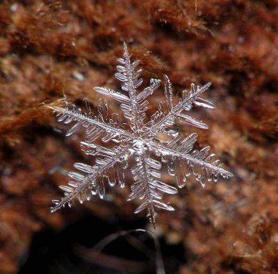 雪の結晶11