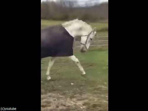 馬のマスクをとったときの馬のリアクション05