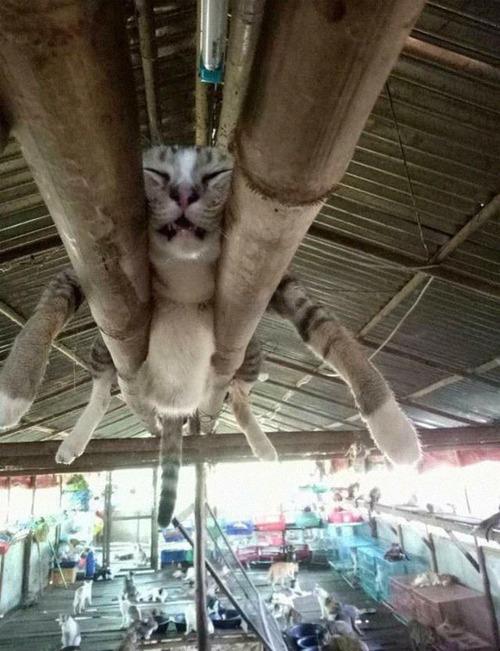 猫はどこでも寝る12