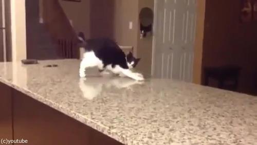 「この猫に…何が起きてるの!」01