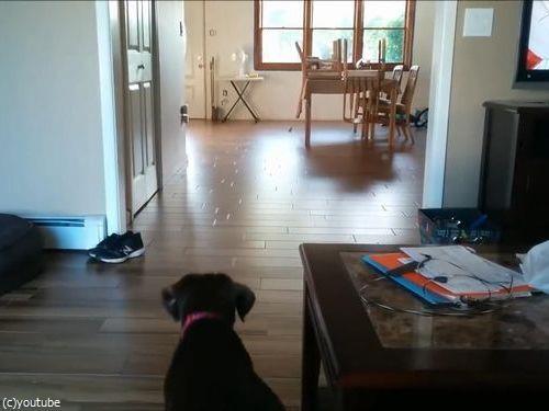マイペースな犬のボール遊び01