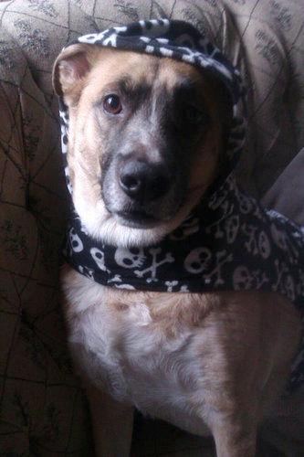 うちの犬が雨の日に外に出る格好01
