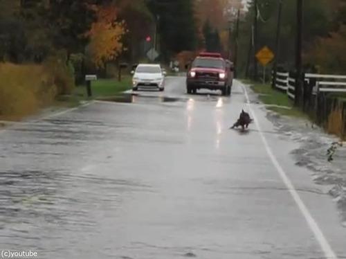 道路で犬が魚釣り03