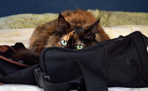 姉の猫に見られてる05