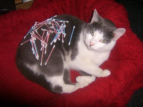 猫の綿棒キャッチ13