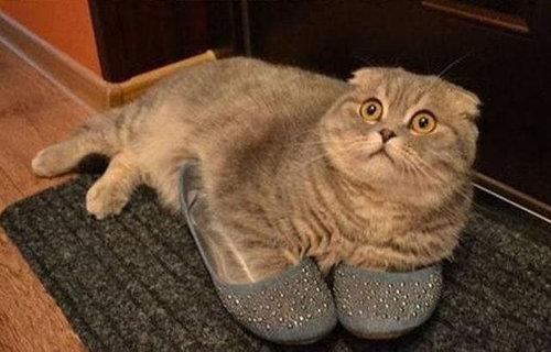 猫の謎の行動16