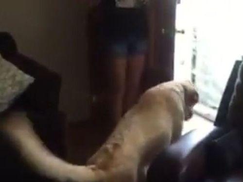 カーペット恐怖症の犬07