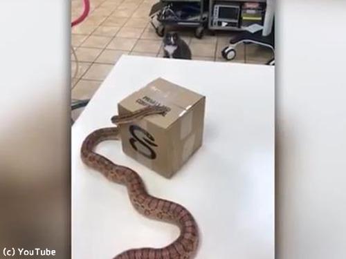 初めて蛇を見た猫の表情がニャンともいえない00
