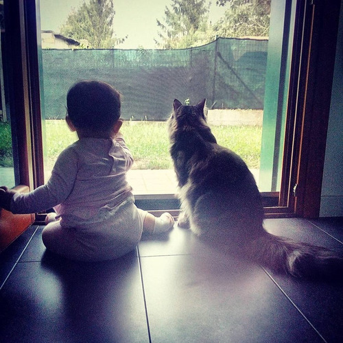 女の子を守る猫06