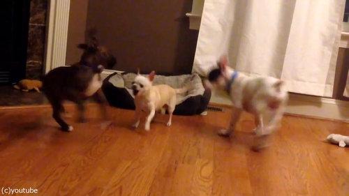 犬2匹がベッドの追い出しに成功02
