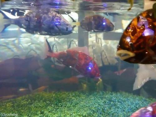 日本の魚ロボット03