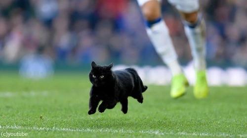 サッカーのピッチに黒猫02