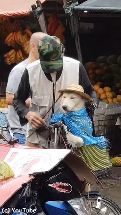 降りだした雨…飼い主さんが愛犬にとった行動に心温まる05