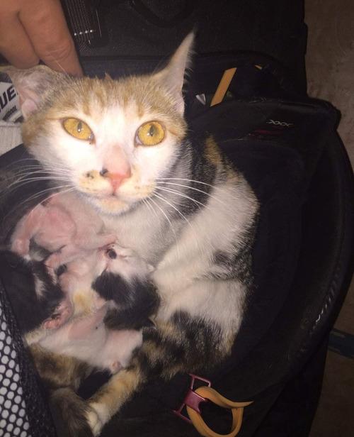 ホッケーのバッグで猫が子育て07