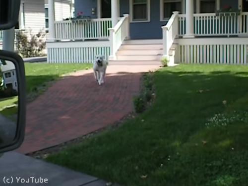郵便受け取りをしてくれる犬01