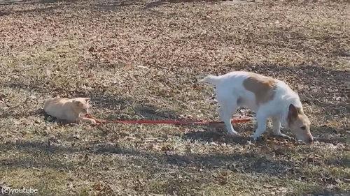 犬のリードを離してくれない猫05