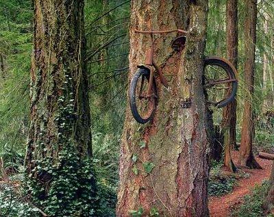 世界の奇妙な木01