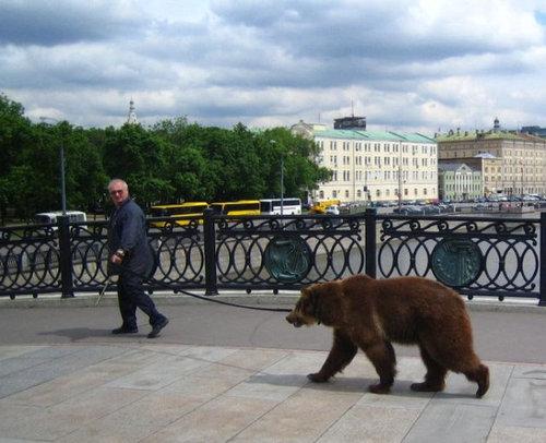 ロシアのクマ06