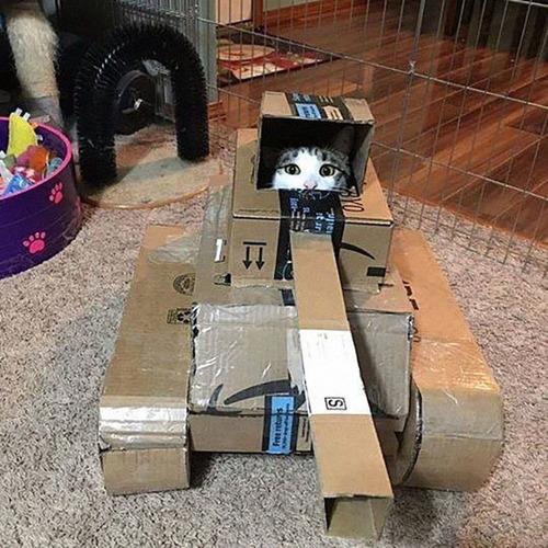 ダンボール猫戦車07