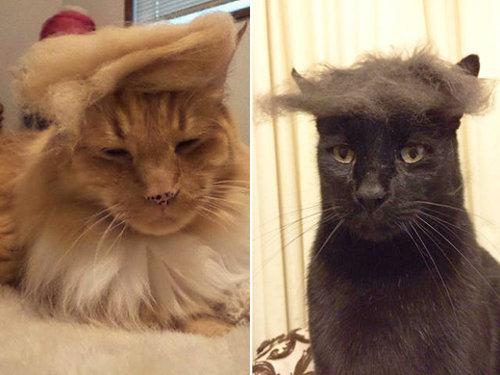 ブラッシングした猫の抜け毛をかつらに08
