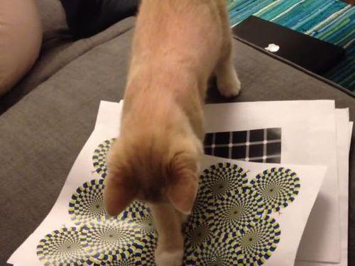 猫と目の錯覚01