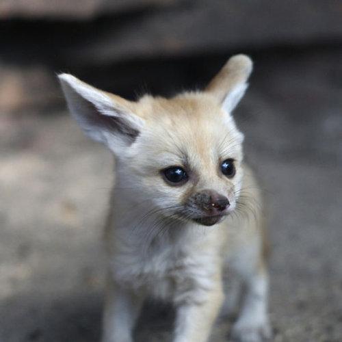 動物の赤ちゃん09