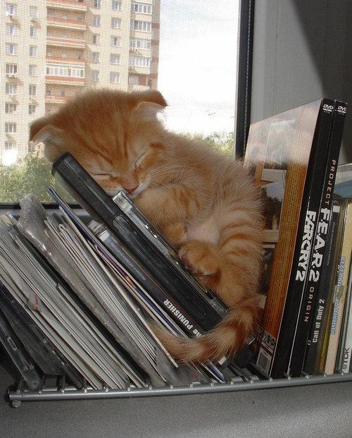 どこでも寝る猫たち15