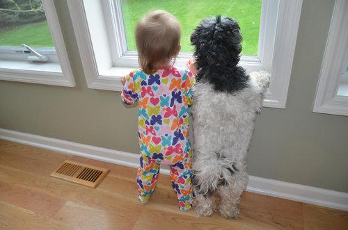 犬と赤ちゃん01