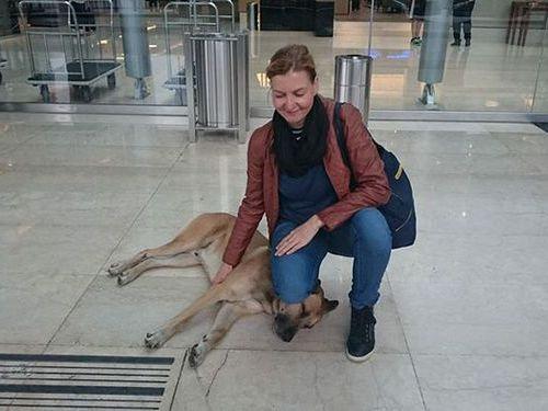 6か月もホテルの前で待ち続けた犬02