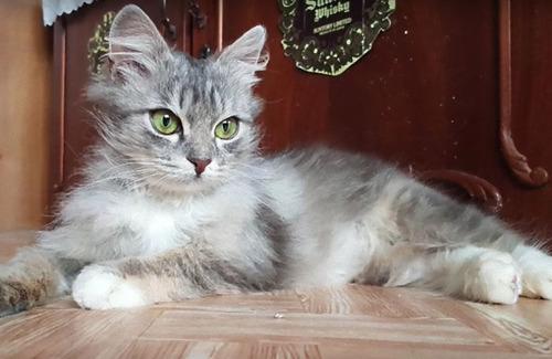 ロシアで凍り付いた猫09