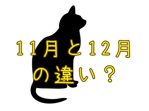 猫の11月と12月の違い00