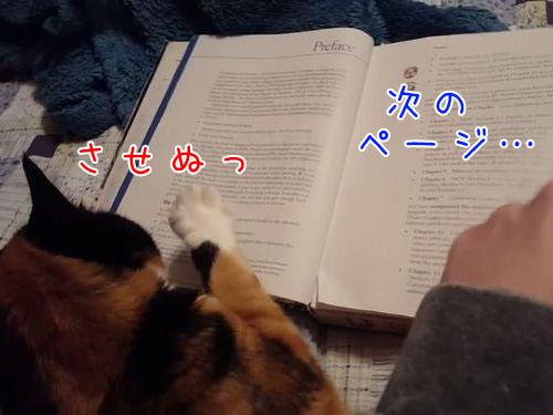 本のページをめくらせない猫00