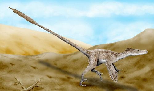 鳥が恐竜の子孫だと実感した04