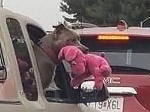 車の窓から犬たちが挨拶01