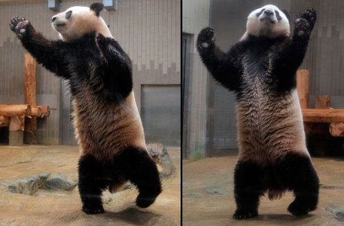 12Dance ダンス、踊る動物たち