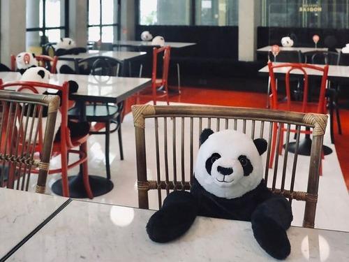 ベトナムのレストランがパンダのぬいぐるみ05