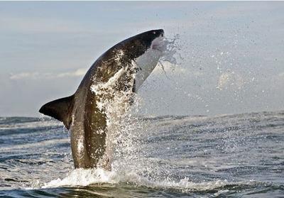飛び跳ねるサメ03