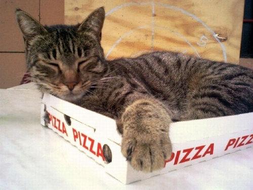 ピザ猫06